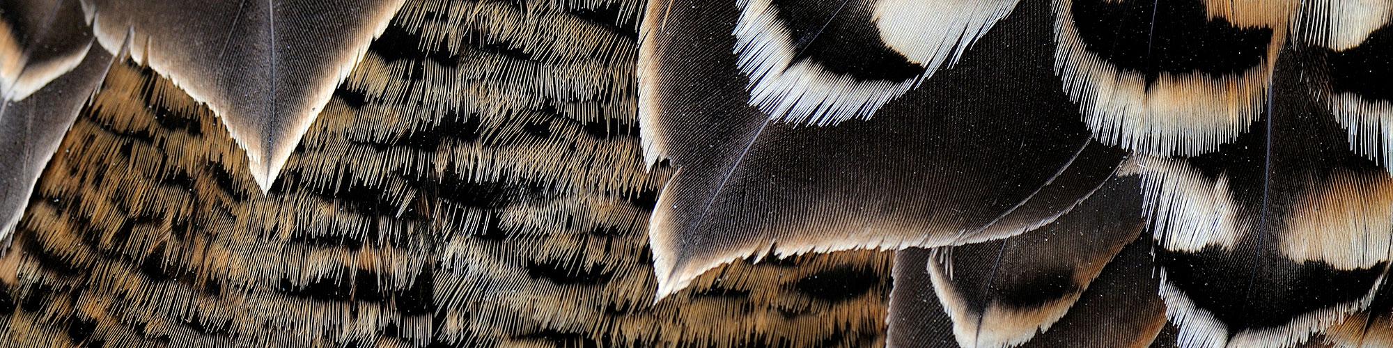 ©Jan Vermeer - Spitsbergen - Noorwegen