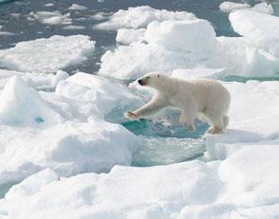 fotoreis-spitsbergen