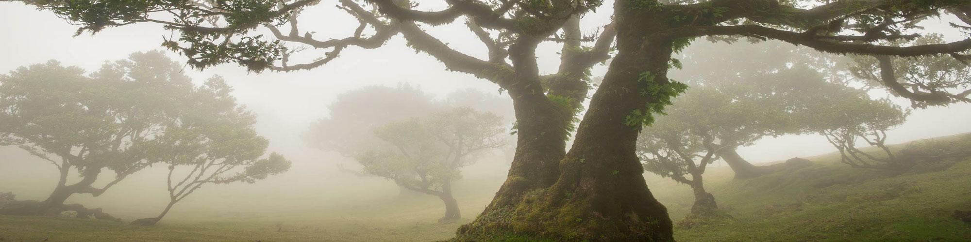 ©Wilco Dragt - Madeira