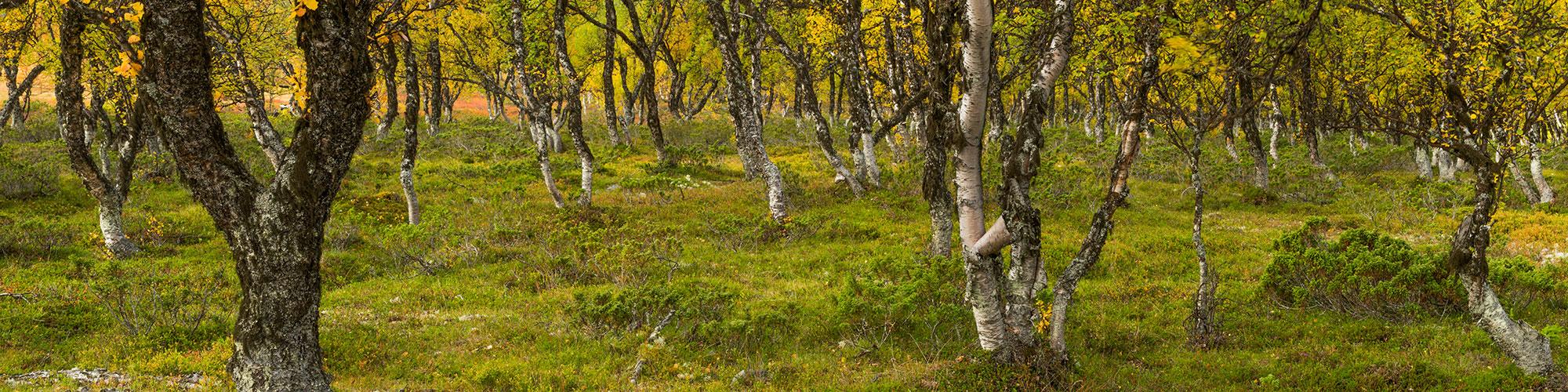 ©Mart Smit - Rondane- Noorwegen - Smitinbeeld