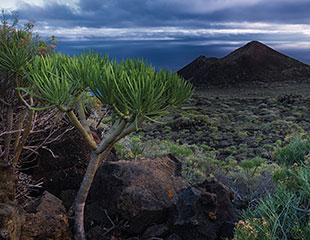 La Palma - fotoreis - ©Charles Borsboom