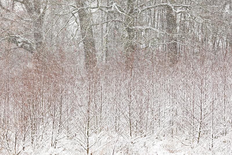 ©Bob Luijks - column Nordic Vision
