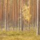 Fotoreis Estland - ©Kristel Schneider